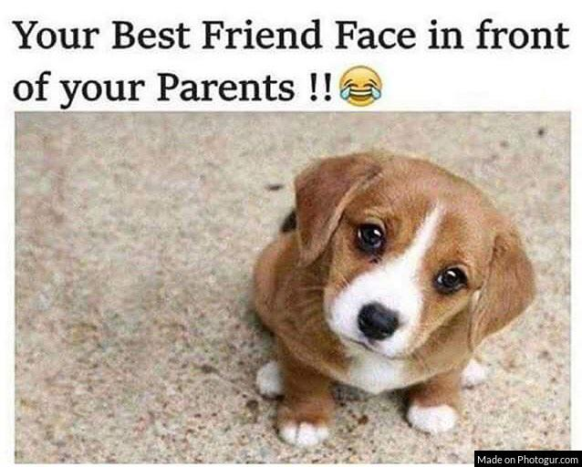 Your Best Friend Face in front of your Parents